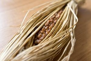 マーボー納豆